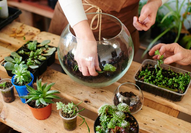 How To Create An Indoor Succulent Garden Sandy Ut